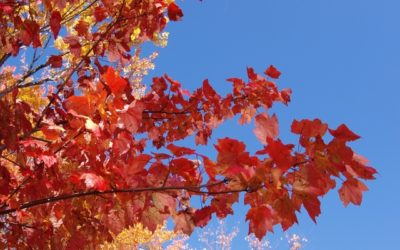 4 Amazing Fall Getaways in America