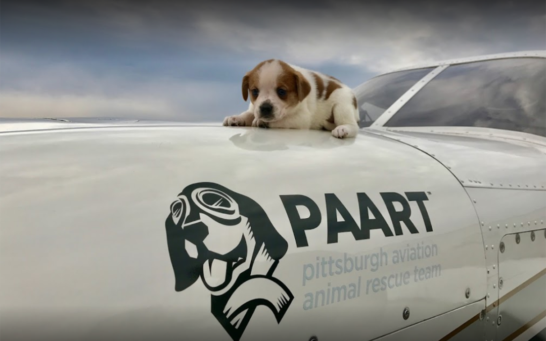 Aviation Charity Highlight: PAART